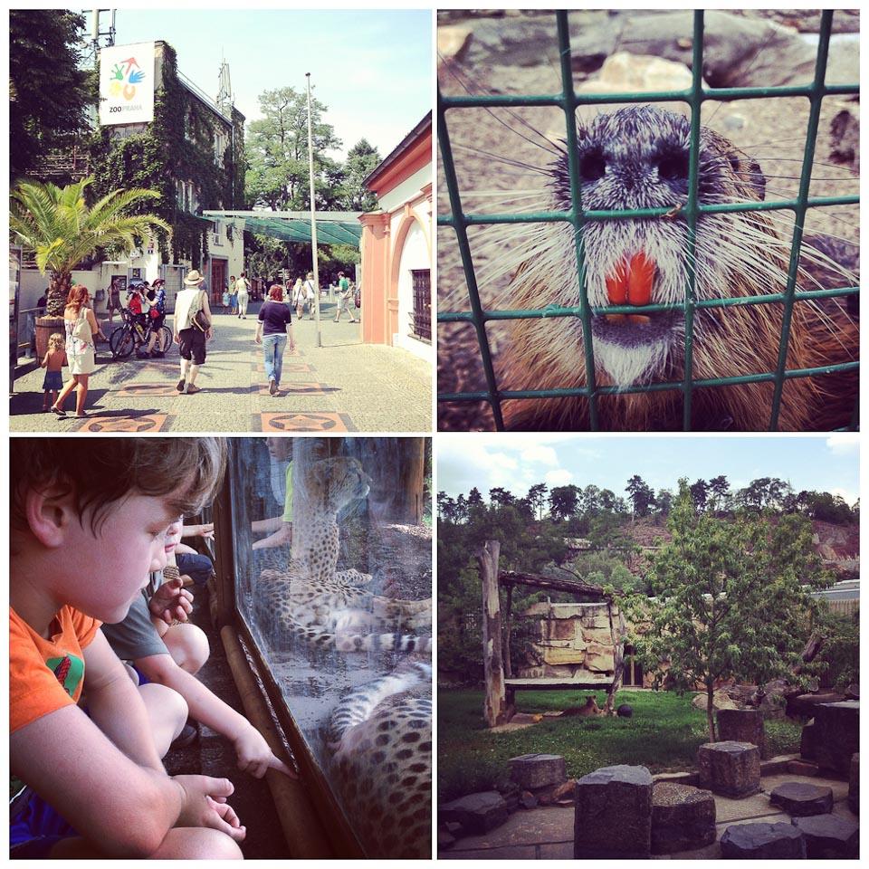 Zoo in Prag