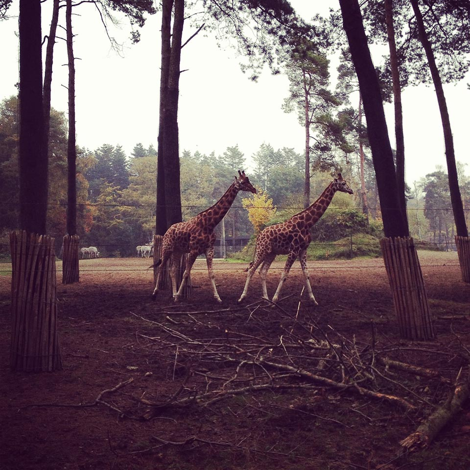 Burgers Zoo in Holland