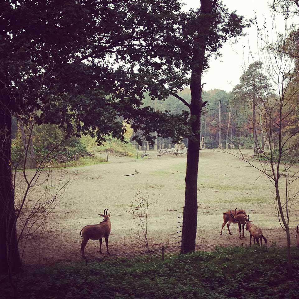 Burgers Zoo in Nordholland