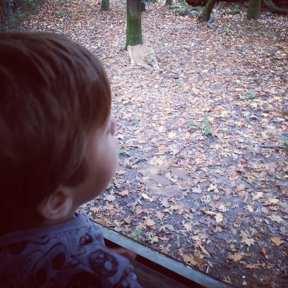 Den Tieren nah in Burgers Zoo