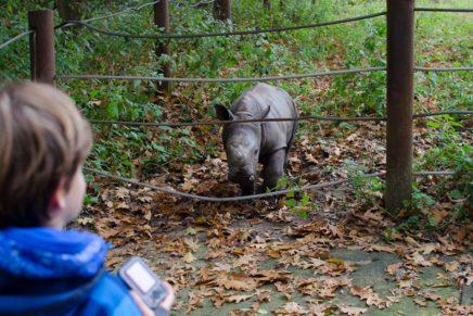 Burgers Zoo in Arnhem – die besten Tipps für einen Besuch im schönsten Tierpark Hollands