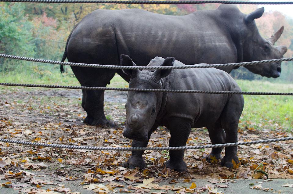 Burgers Zoo Holland