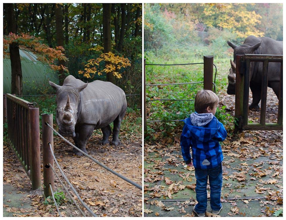 Nashornbaby in Burgers Zoo in Holland