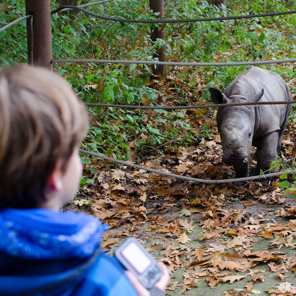 Auge in Auge mit einem Nashornbaby in Burgers Zoo, Holland