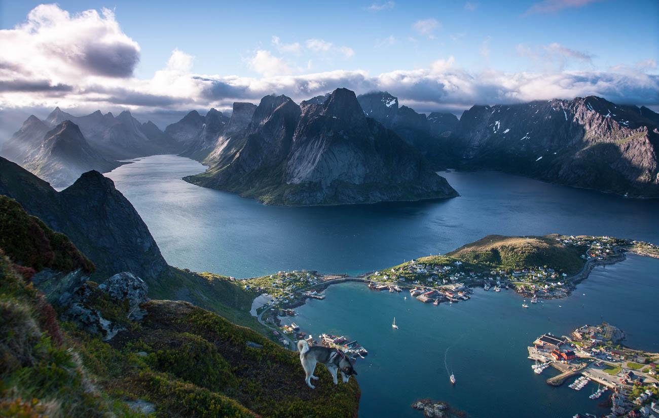 Lofoten Panorama Norwegen mit Husky © Nico Walz