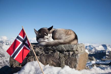 53 Tage Nudeln – Low Budget Norwegen Urlaub mit Hund