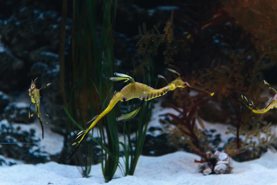 Dubai mit Kind - Aquarium