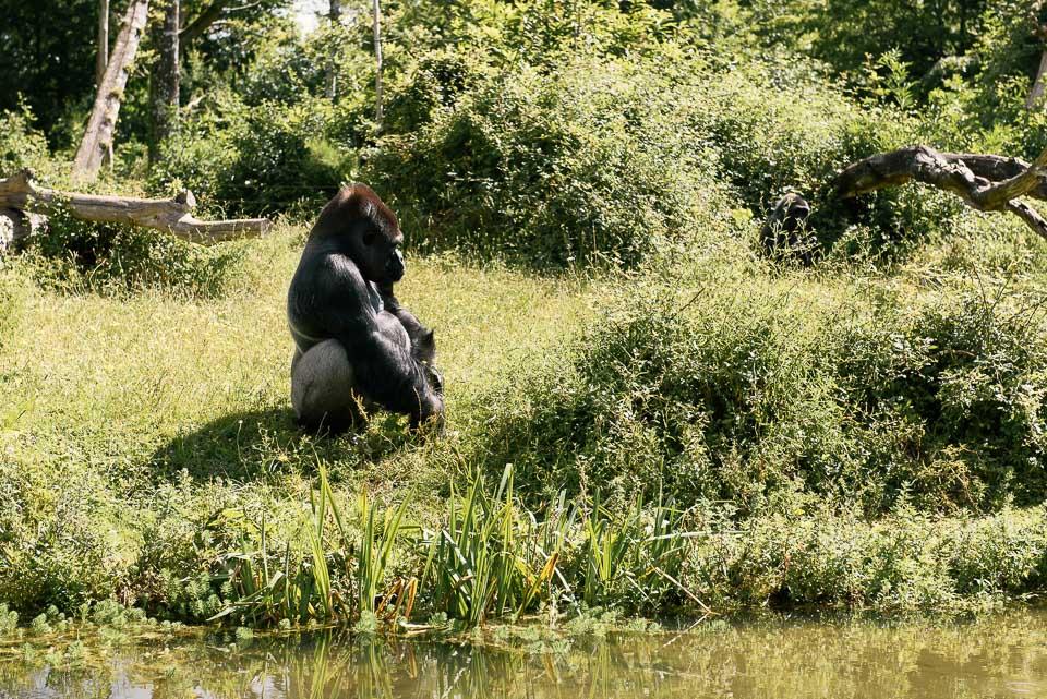 La Vallée des Singes - im Tal der Affen in Westfrankreich