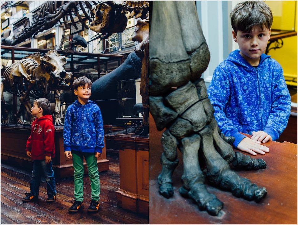 das Natural History Museum in Dublin